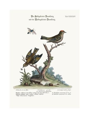 The Golden-Crowned Wren, and the Ruby-Crowned Wren, 1749-73