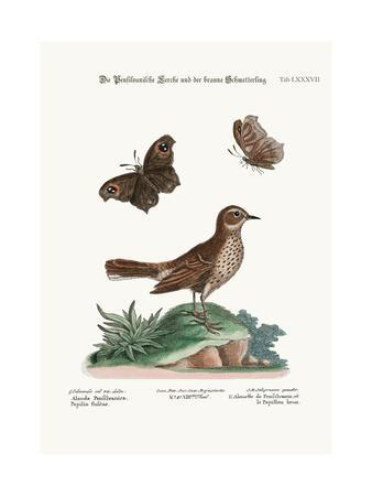 The Lark from Pensilvania, and the Brown Butterfly, 1749-73