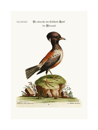 The Rose or Carnation-Coloured Ouzel of Aldrovandi, 1749-73