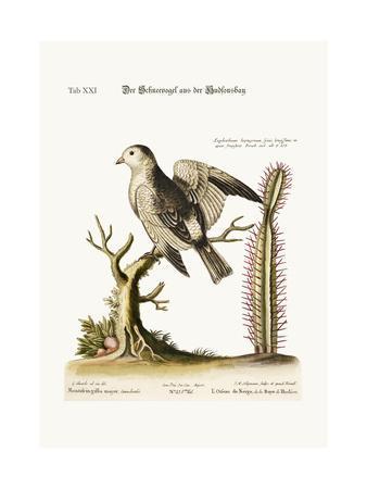 The Snow-Bird from Hudson's Bay, 1749-73