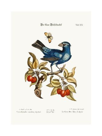 The Blue Gros-Beak from Angola, 1749-73