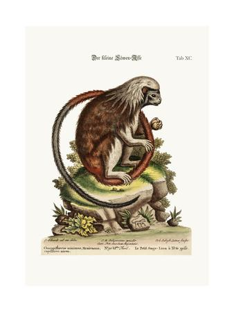 The Little Lion-Monkey, 1749-73