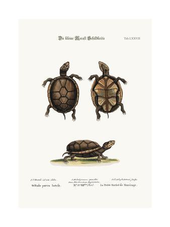 The Small Mud-Tortoise, 1749-73