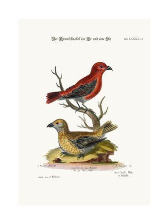 The Cross-Bills, Cock and Hen, 1749-73