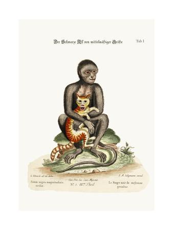 The Middle-Sized Black Monkey, 1749-73