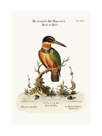 The Spotted Kingfisher, 1749-73