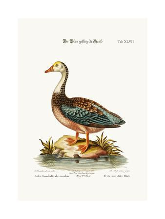 The Blue-Winged Goose, 1749-73