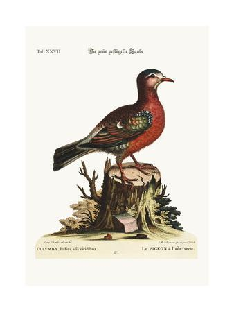The Green-Winged Dove, 1749-73