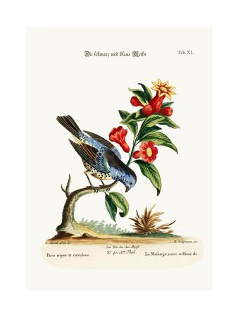 The Black and Blue Tit-Mouse, 1749-73