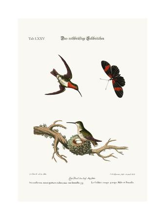 The Red-Throated Hummingbird, 1749-73