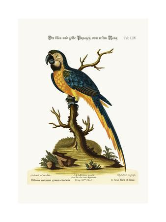 The Blue and Yellow Maccaw, 1749-73