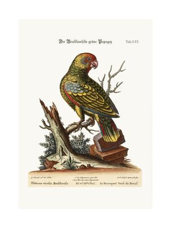 The Brasilian Green Parrot, 1749-73