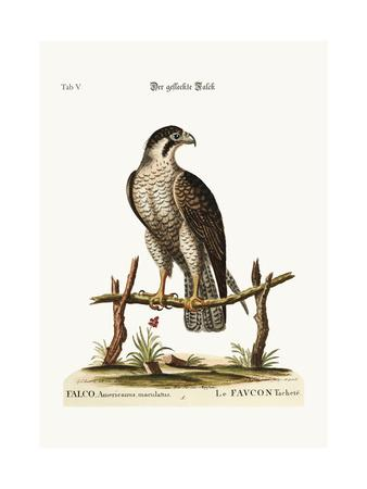 The Spotted Hawk or Falcon, 1749-73