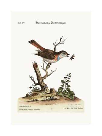 The Blue-Throat Redstart, 1749-73
