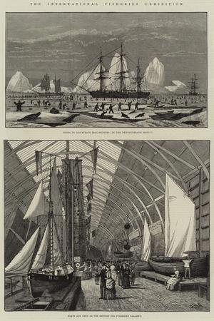The International Fisheries Exhibition