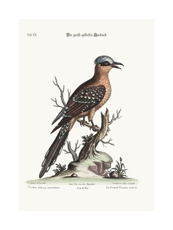 The Great Spotted Cuckow, 1749-73