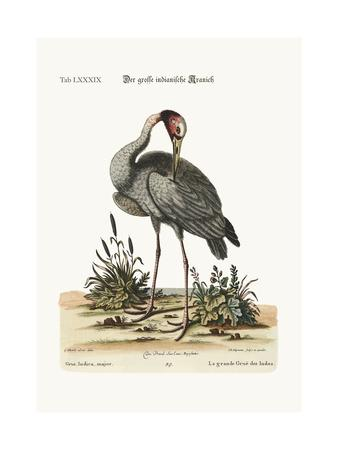 The Greater Indian Crane, 1749-73