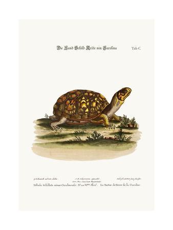 The Land-Tortoise from Carolina, 1749-73