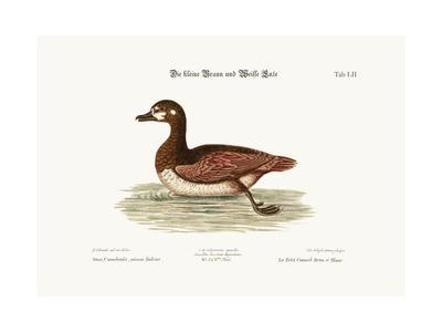 The Little Brown and White Duck, 1749-73