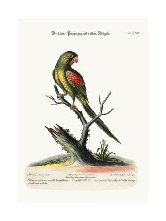 The Little Red-Winged Parrakeet, 1749-73