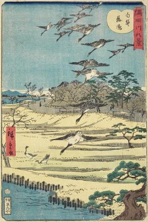 Homing Geese at Shirahige, November 1861
