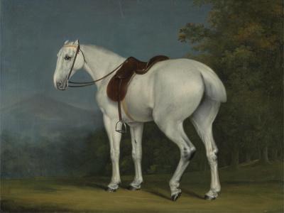 A Lady's Grey Hunter, C.1806