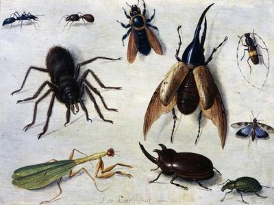 Insects, 1660