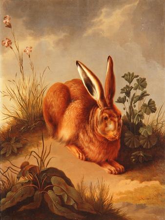Hare, C.1770