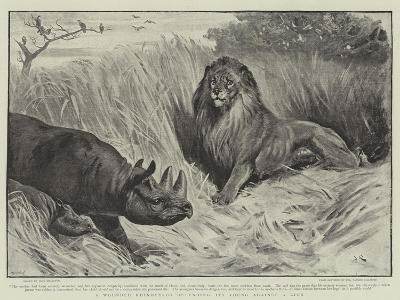 A Wounded Rhinoceros Defending its Young Against a Lion