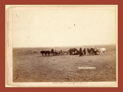 The Shepherd and Flock. on F.E. and M.V. R'Y. in Dakota