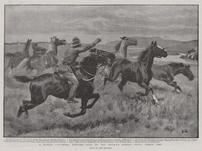 A Plucky Colonial, Driving Some of the Enemy's Horses While under Fire