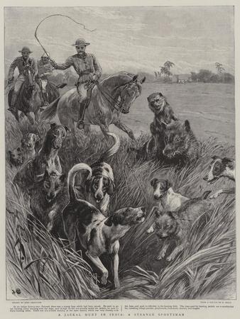 A Jackal Hunt in India, a Strange Sportsman