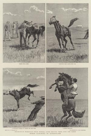 Horse Ranching in Queensland