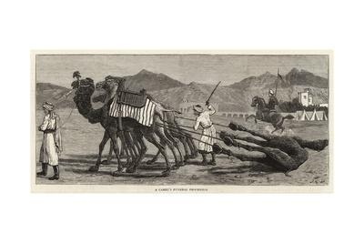 A Camel's Funeral Procession