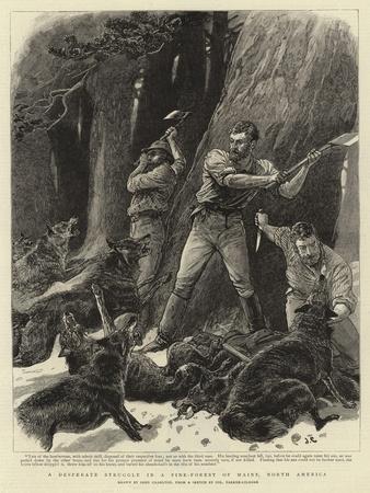 A Desperate Struggle in a Pine-Forest of Maine, North America