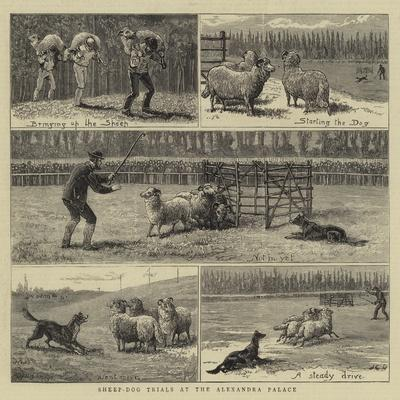 Sheep-Dog Trials at the Alexandra Palace