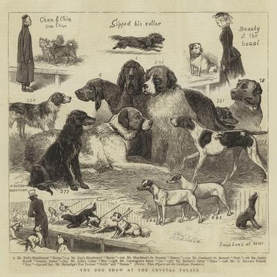 The Dog Show at the Crystal Palace