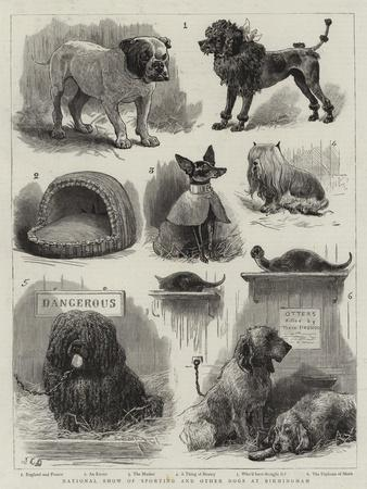 National Show of Sporting and Other Dogs at Birmingham
