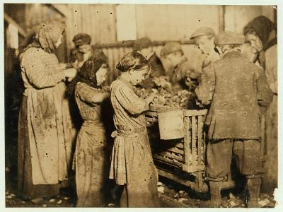 Shuckers Aged About 10 Opening Oysters in the Varn and Platt Canning Company