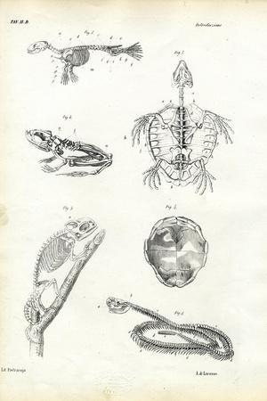 Turtle, 1863-79