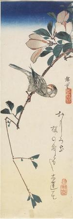 Java Sparrow and Magnolia, 1834-1839