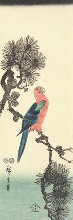 Parrot on Pine Tree, 1847-1852