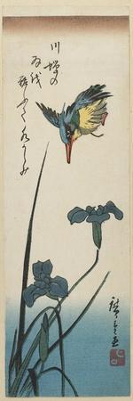 Iris and Kingfisher, 1843-1847