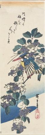 Kingfisher and Hydrangea