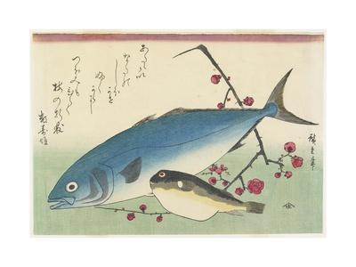 Bonito, Globefish and a Spray of Blossoming Plum, C. 1840