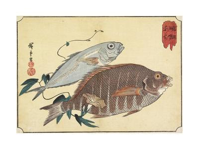 Striped Snapper and Horse Mackerel, Early 19th Century