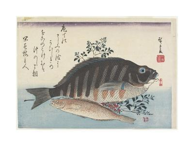 Sea Bream, Sweetfish and Nandina Branches, C. 1840