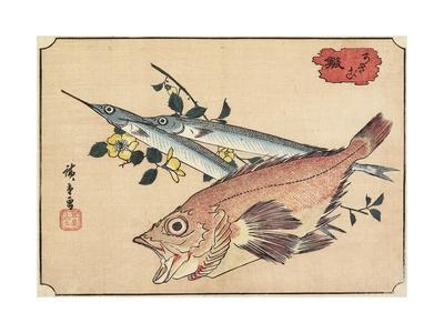 Rockfish and Halfbeak, Early 19th Century