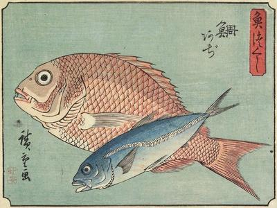 Snapper and Horse Mackerel, 1830-1844