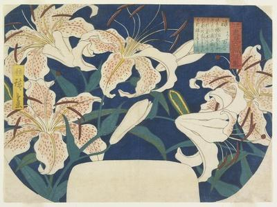 Gift: Spotted Lilies, C. 1844